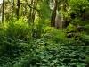 cascade-forest
