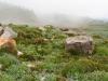 alpine-flower-boulder-garden