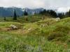 paradise-hillside