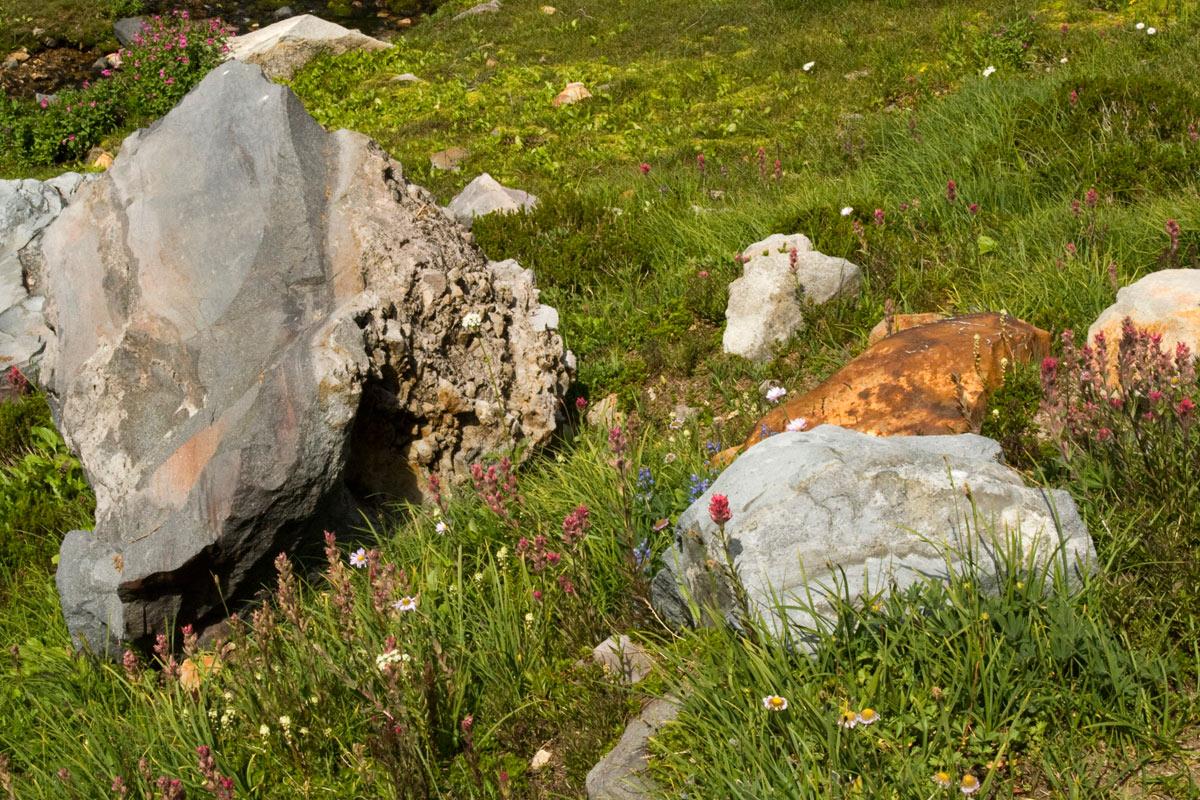 boulders-wildflowers