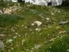 rainier-lupines