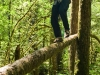 balancing-on-a-tree