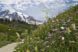 wildflowers in front of Mount Rainier
