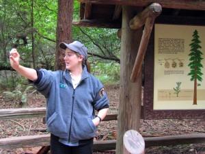 displaying redwood cone at interpretive talk