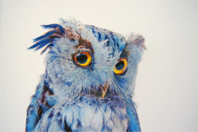 John Pusateri - blue owl