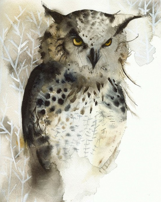 amber alexander - owl