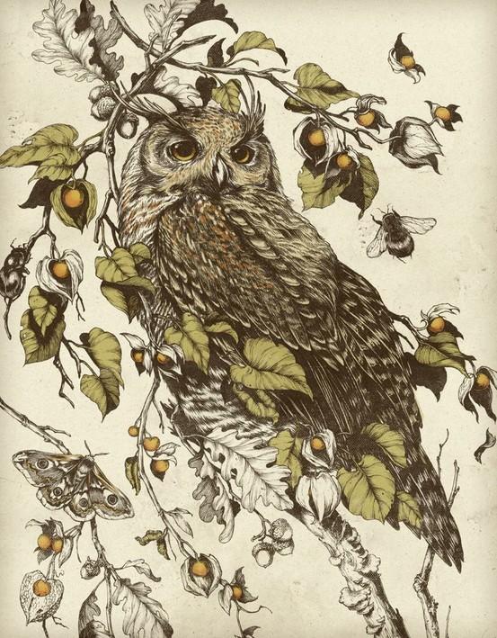 teagan white - owl