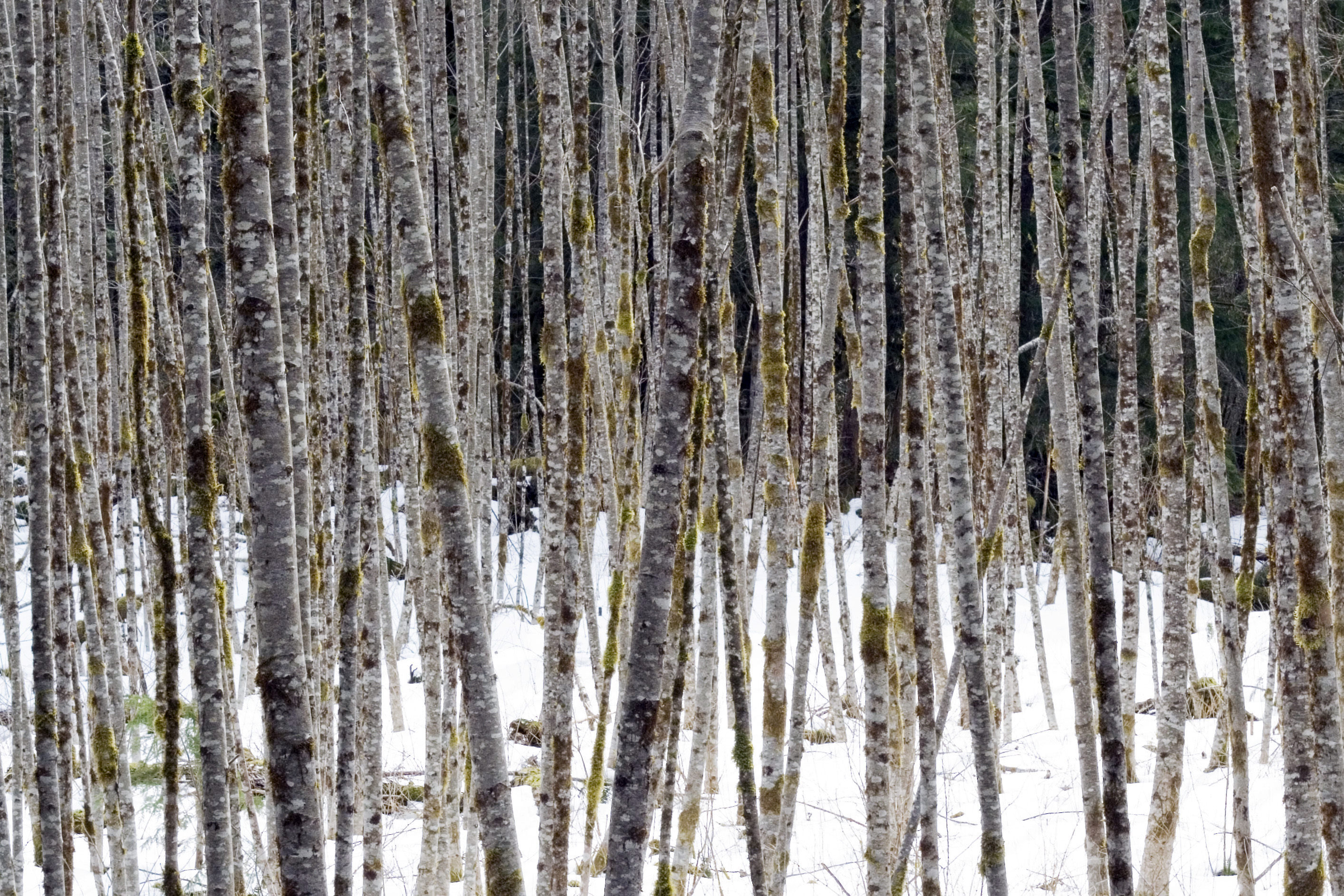 Free Textures Pacific Northwest Forest Native