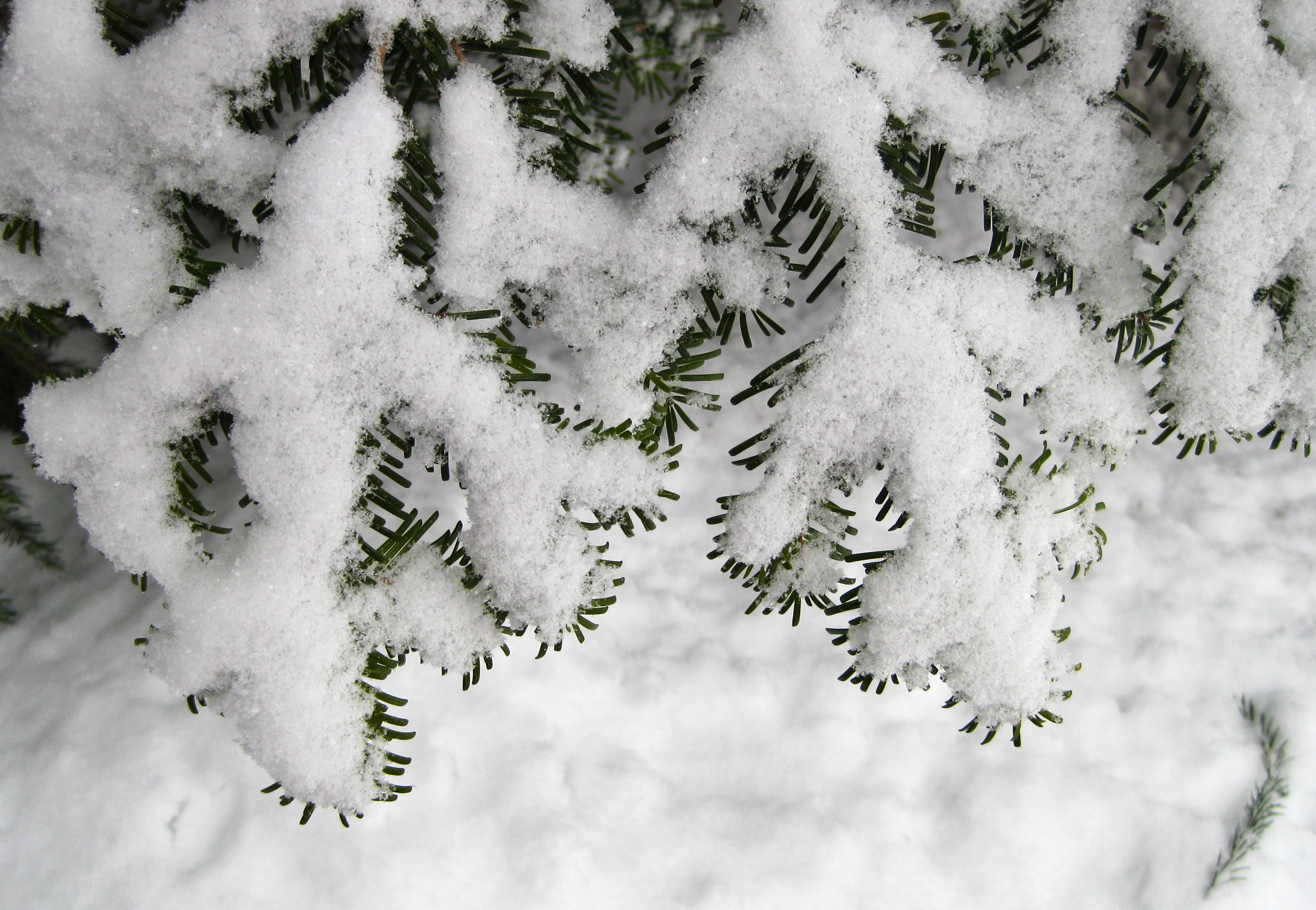 Dusting of snow on branch