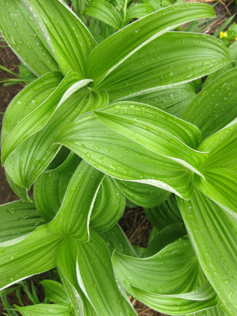 textural creased leaves