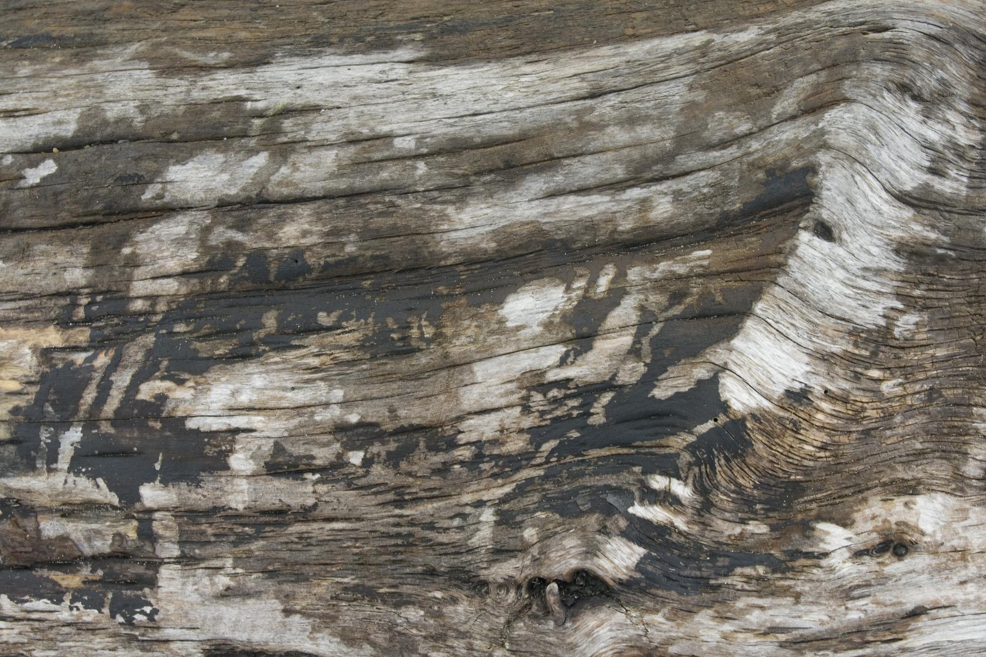 Ocean Shores beach wood texture