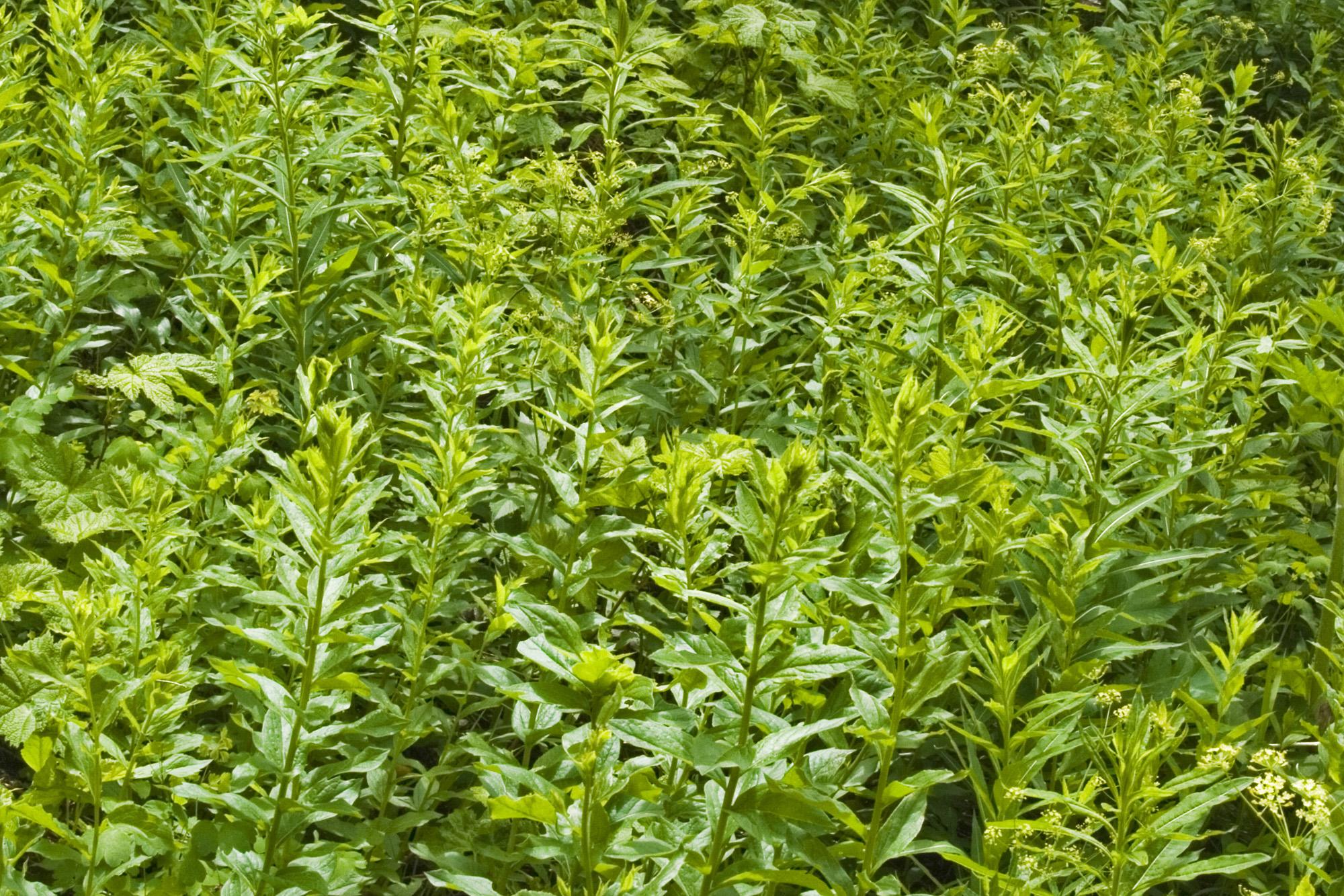 lush vegetation by Bean Creek Basin