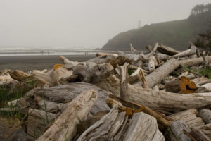 foggy day at Cape Disappointment beach
