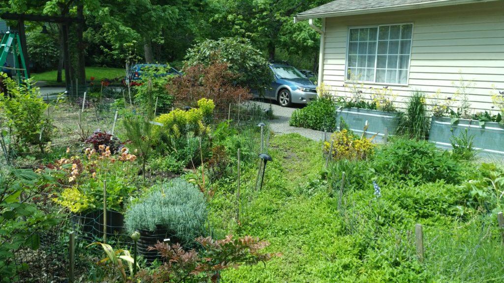 weedy garden path