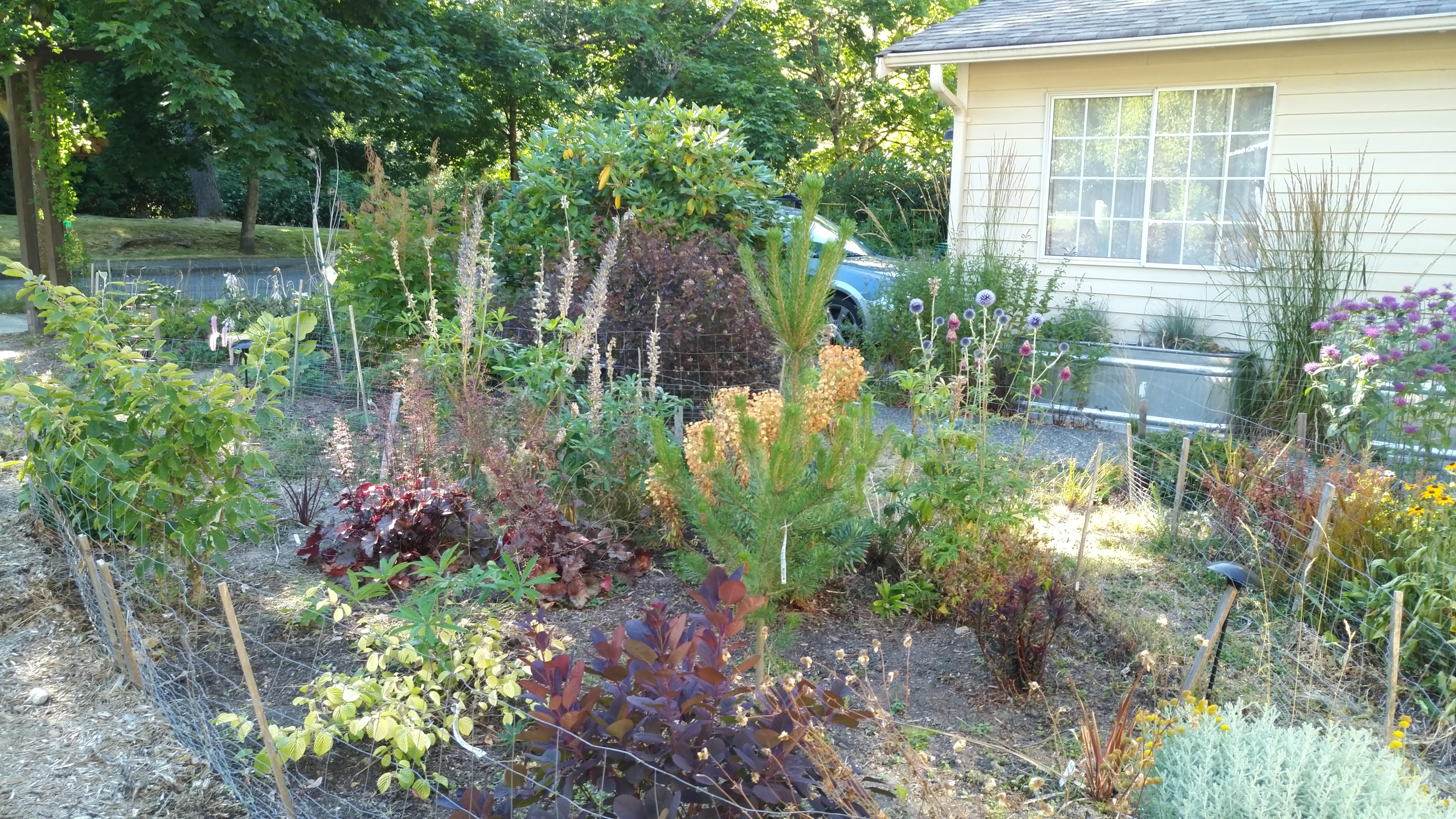 garden archives cascadia inspiredcascadia inspired