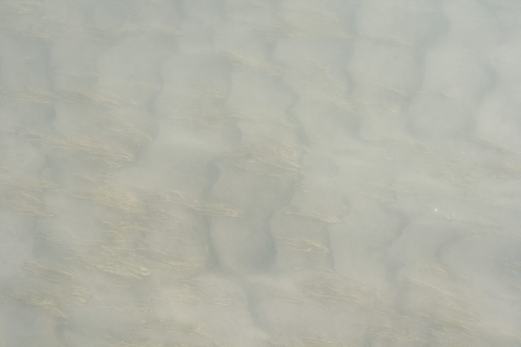 rippling sand texture with grasses