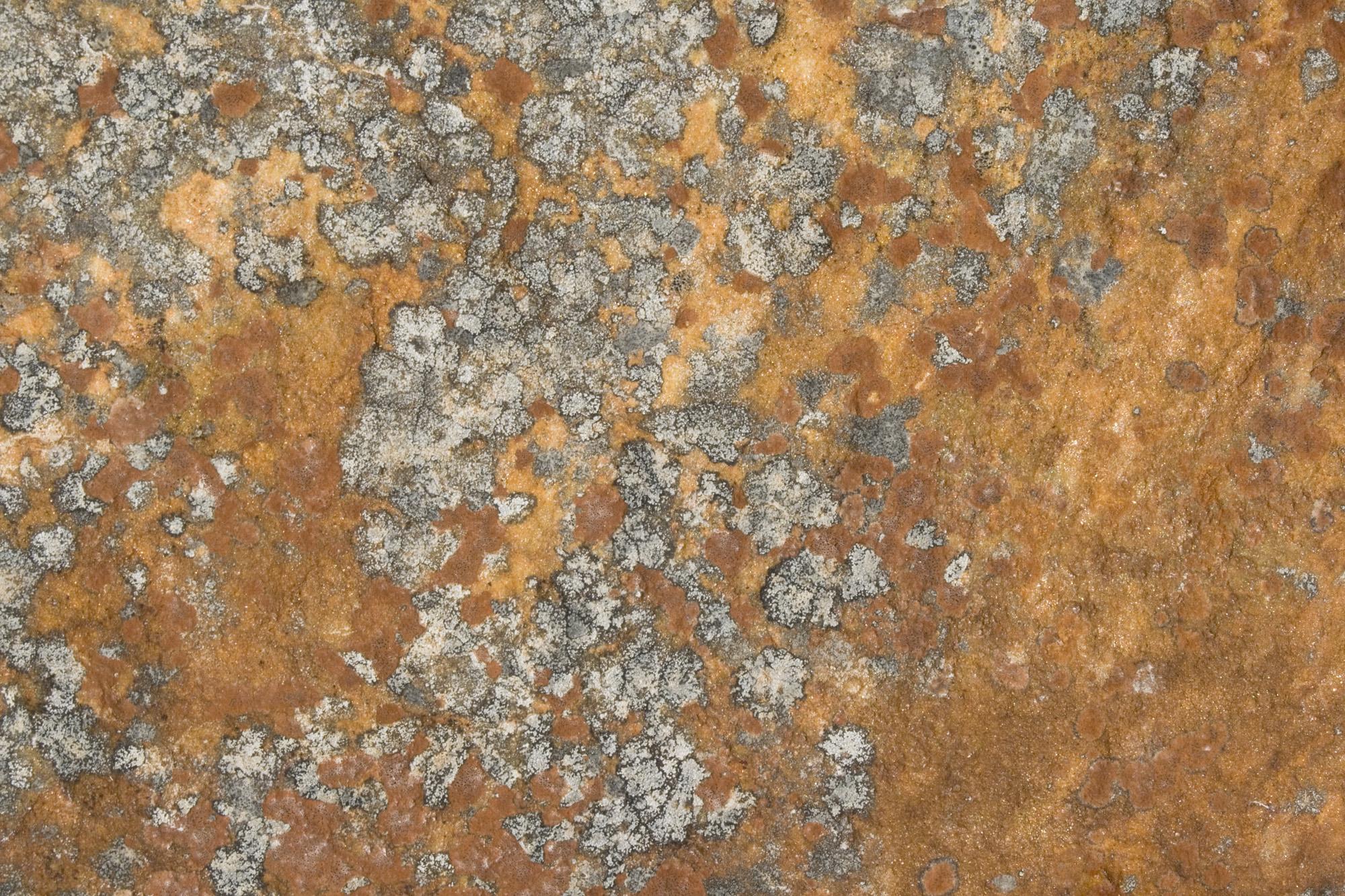 Textures Of Jasper National Park Stone Worn And Lichen