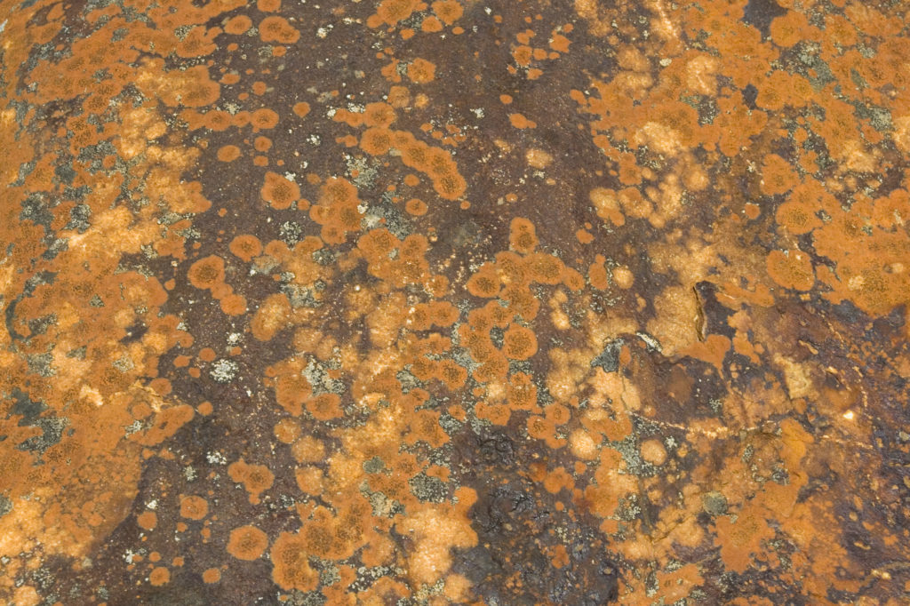 red orange lichen on brown stone