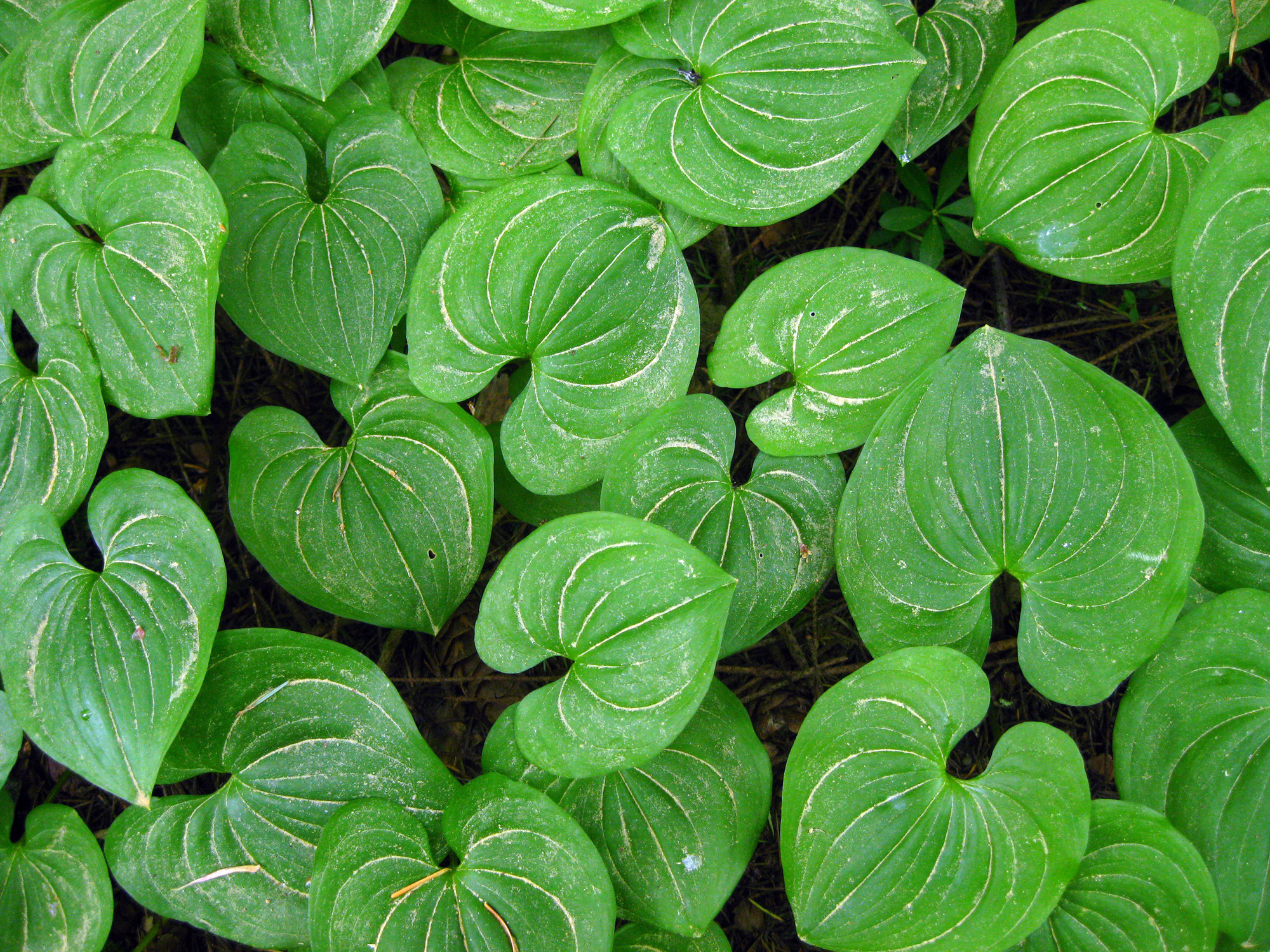 Textures Of Pacific Northwest Native Plants Pnw Art Nature